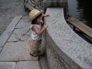 ひかりさんと池の鯉